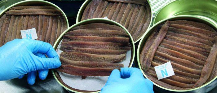 Preparación de conservas de anchoa en Santoña.