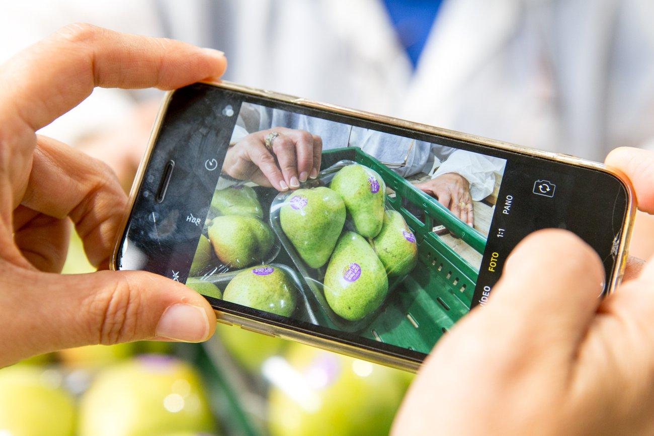 DOP Pera de Lleida: fotografiando peras limoneras