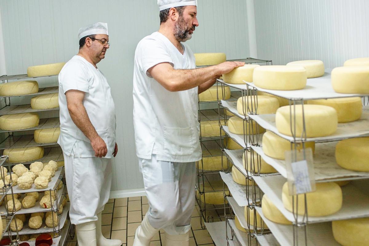 Dos trabajadores se preparan para hacer el volteo de los quesos.