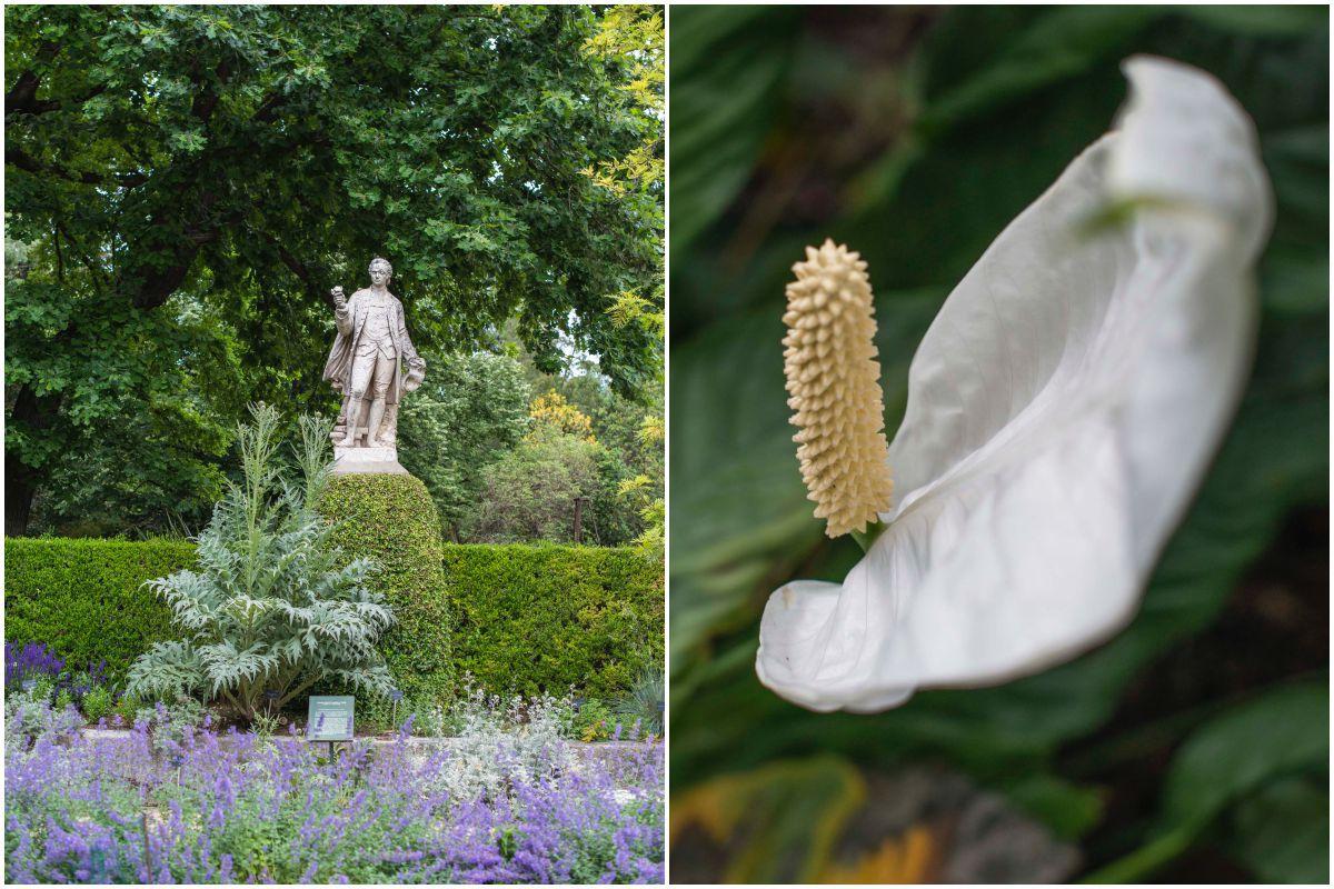 Avenida de las estatuas y detalle de la flor del Spathiphyllum, en la zona intertropical del invernadero Santiago Castroviejo Bolívar, en el Real Jardín Botánico de Madrid.