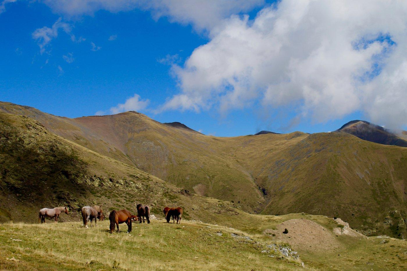 Hotel rural 'Mas El Mir': caballos salvajes