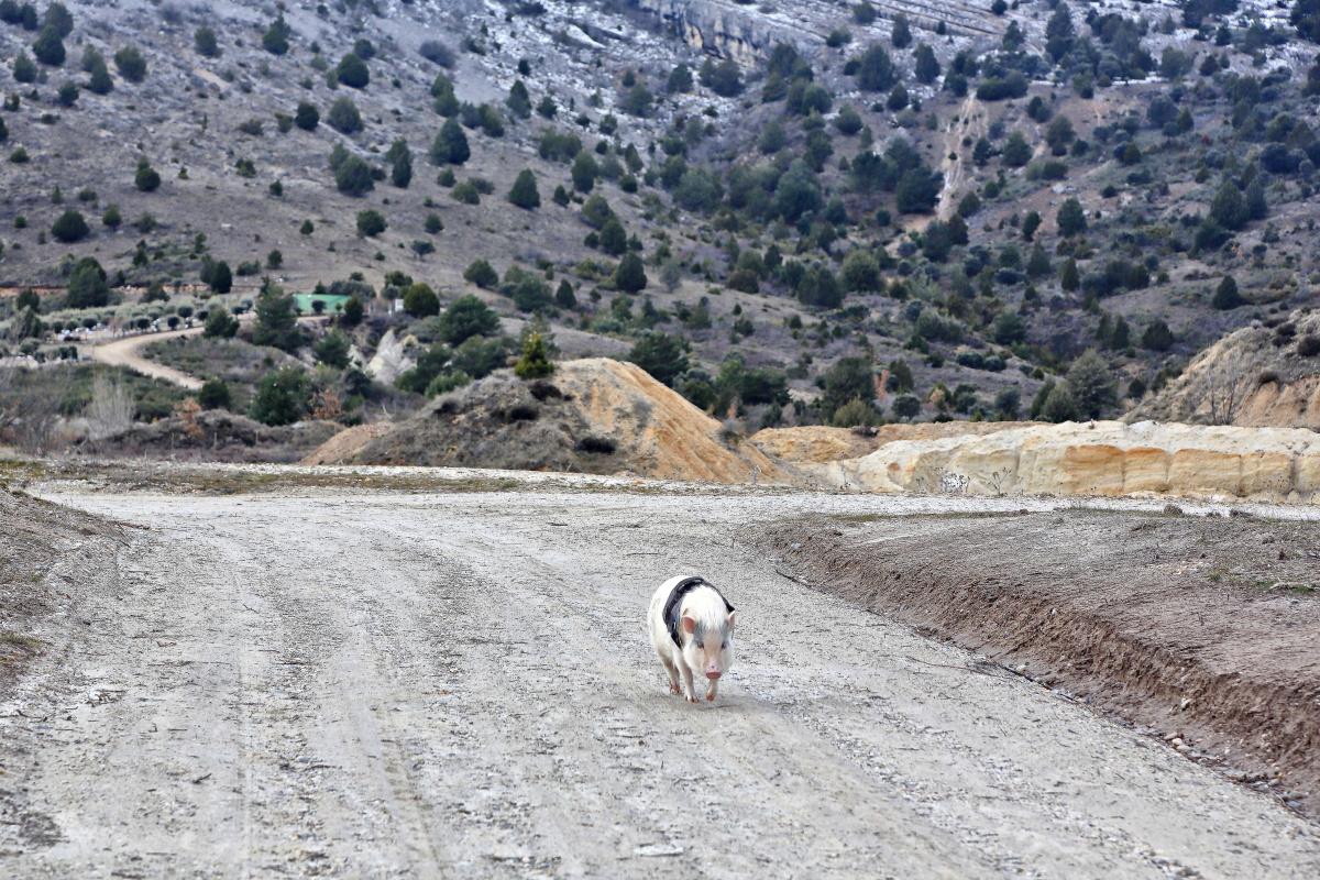 La plantación está a los pies de la sierra de Cabrejas, a 1.200 metros de altitud.