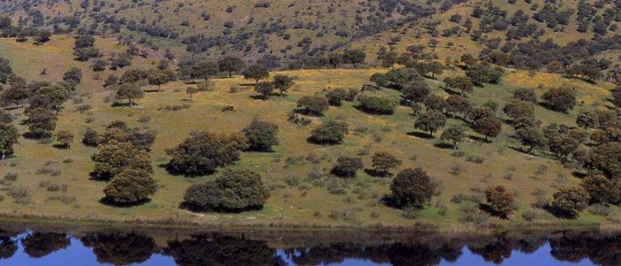 Panorámica valle de Alcudia.