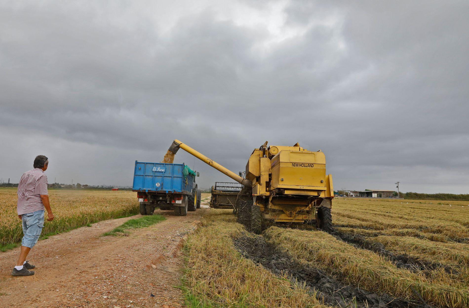 Arroces 'Molino Roca': cosecha del arroz