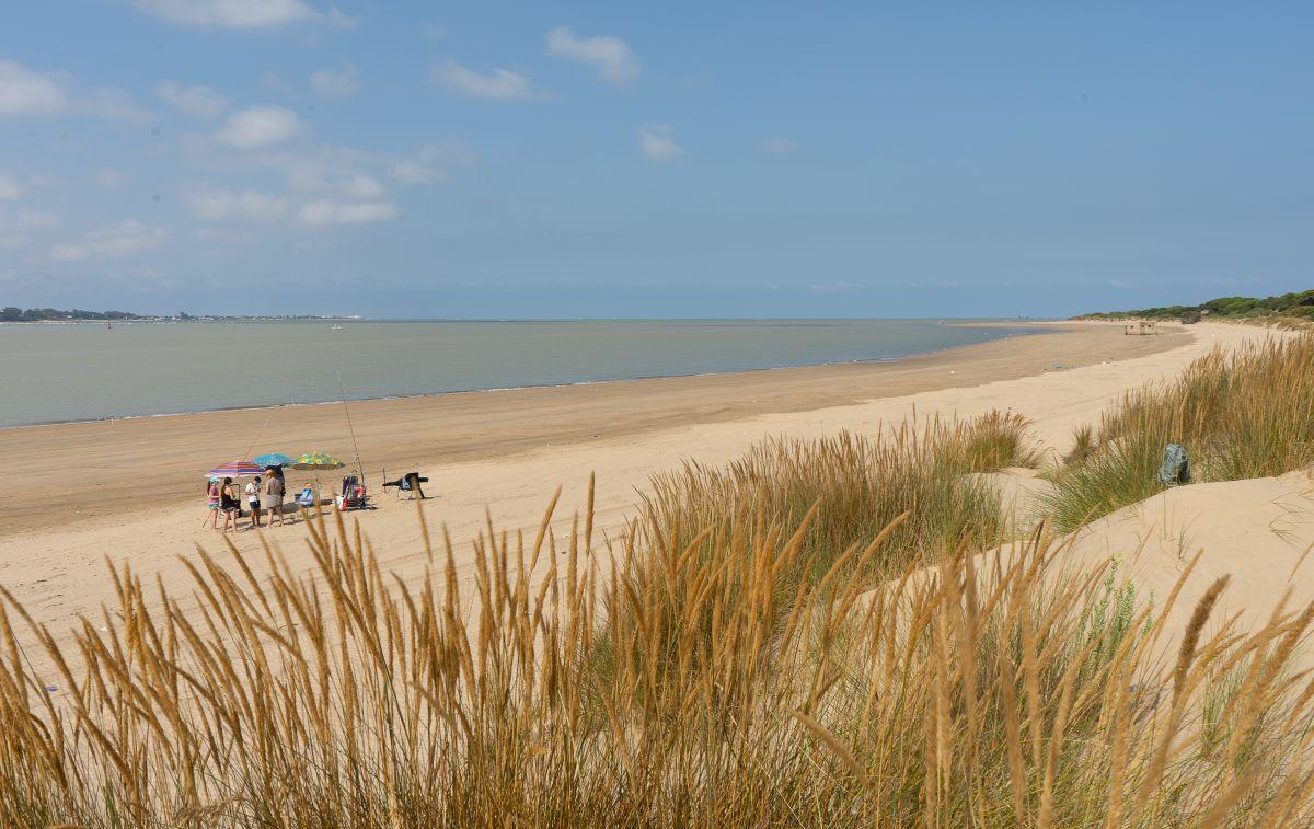 En Doñana hay 28 kilómetros de playa virgen hasta Matalascañas.