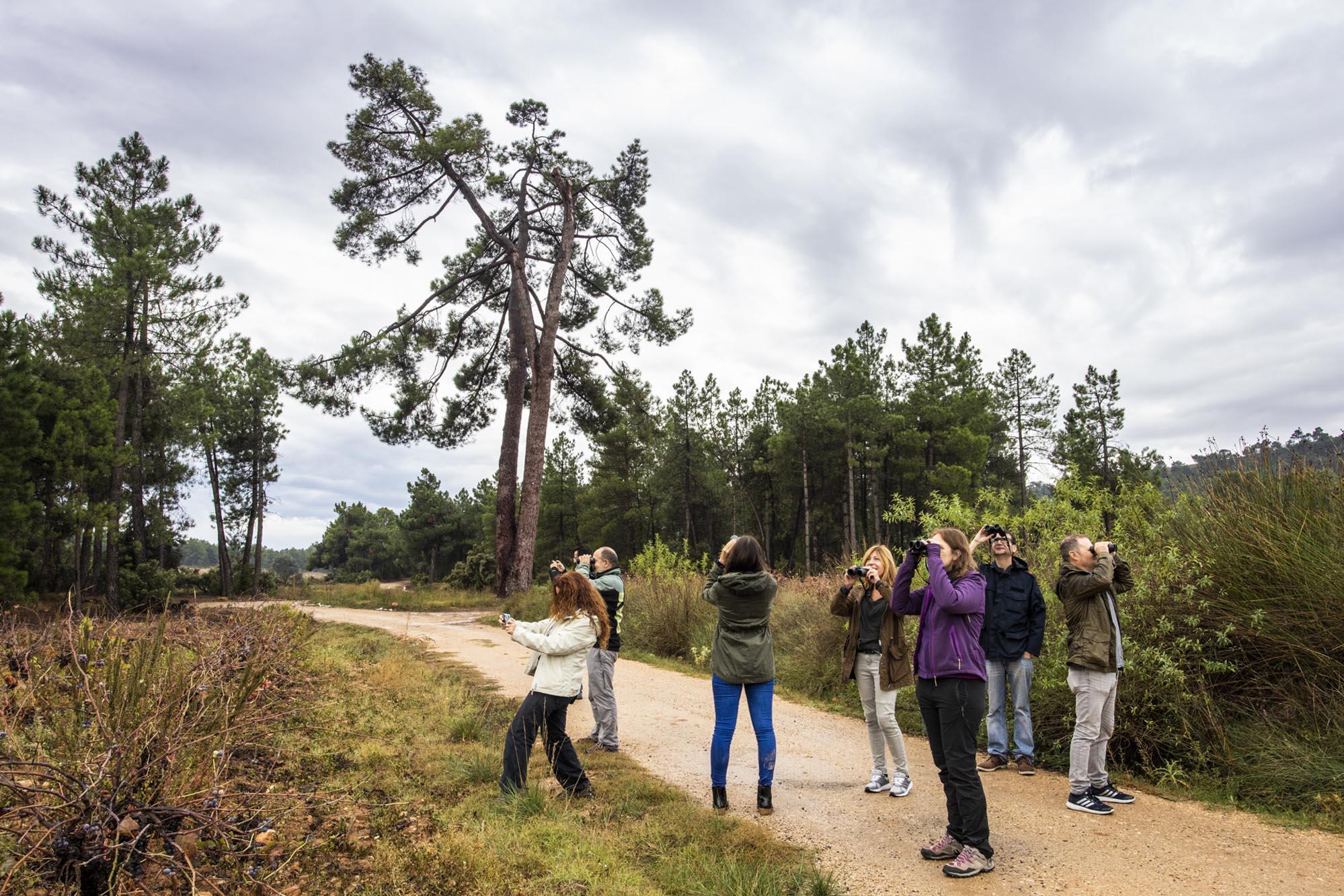 A los pies de un pino centenario considerado árbol monumental de la Comunidad Valenciana, en el paraje de Hoya de Ramadán.