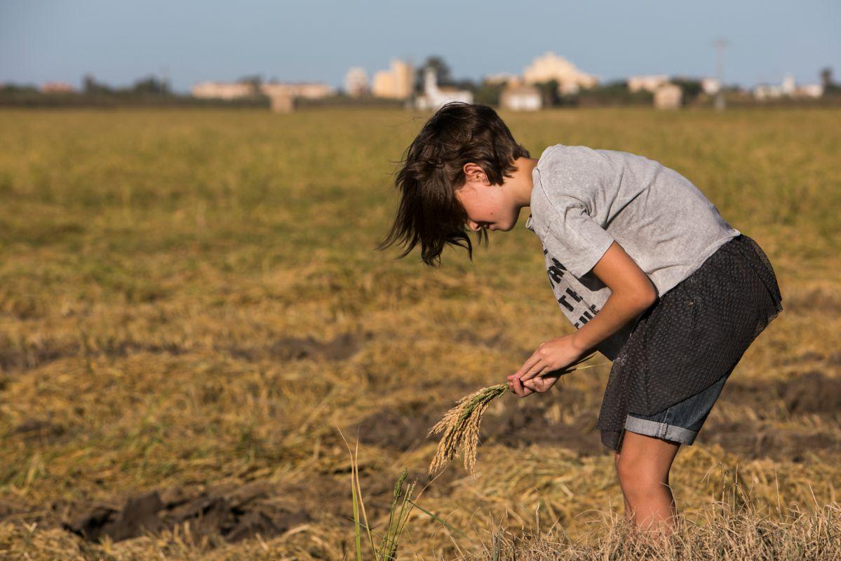 Las visitas que recorren la Finca Estell entran en contacto con la planta del arroz.