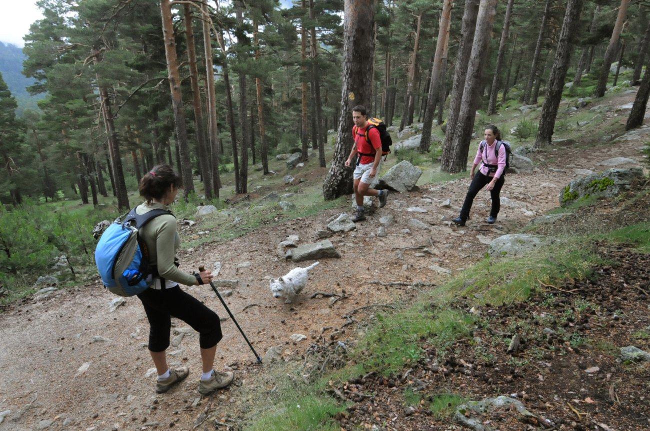 Parque Nacional de Guadarrama: Excursionistas por el bosque de Valsaín