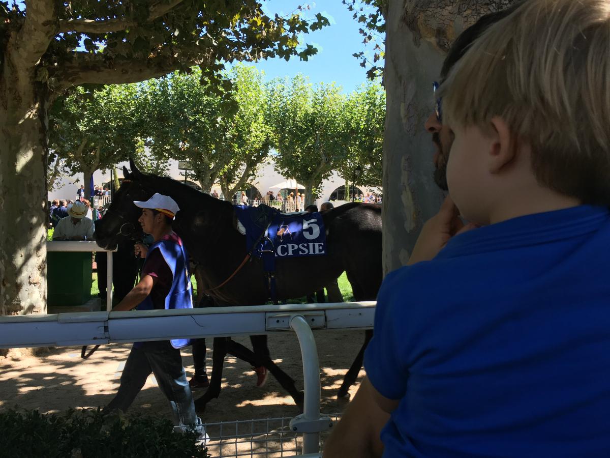 Los niños adoran los caballos. Foto: B. V.