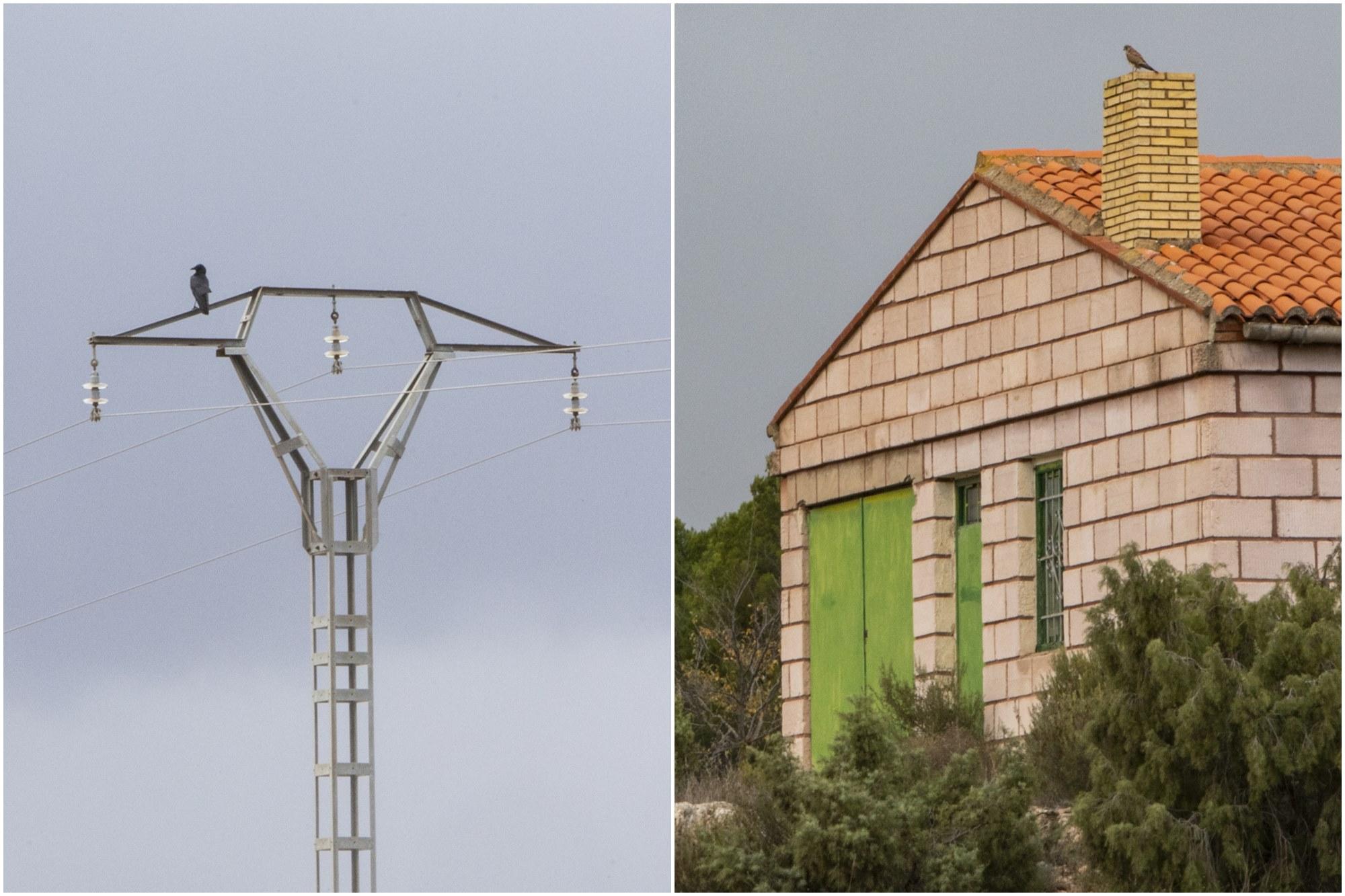 Una corneja se posa en el cable de electricidad mientras que el cernícalo prefiere la chimenea de una casa cercana.