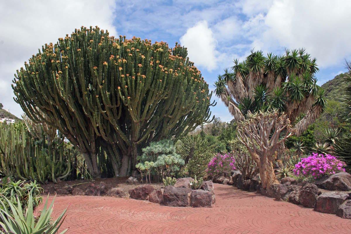 Jardín Botánico Viera y Clavijo. Autor: Manuel Quevedo.