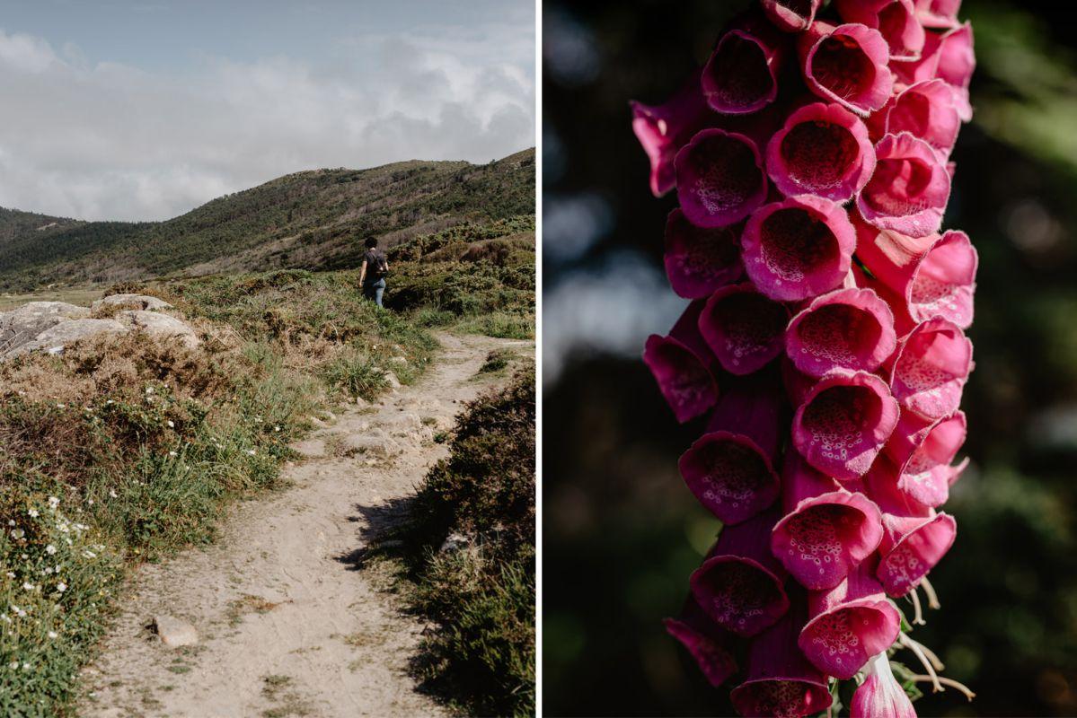 Senderos y campanillas de O Camiño dos Faros (Costa da Morte, A Coruña).