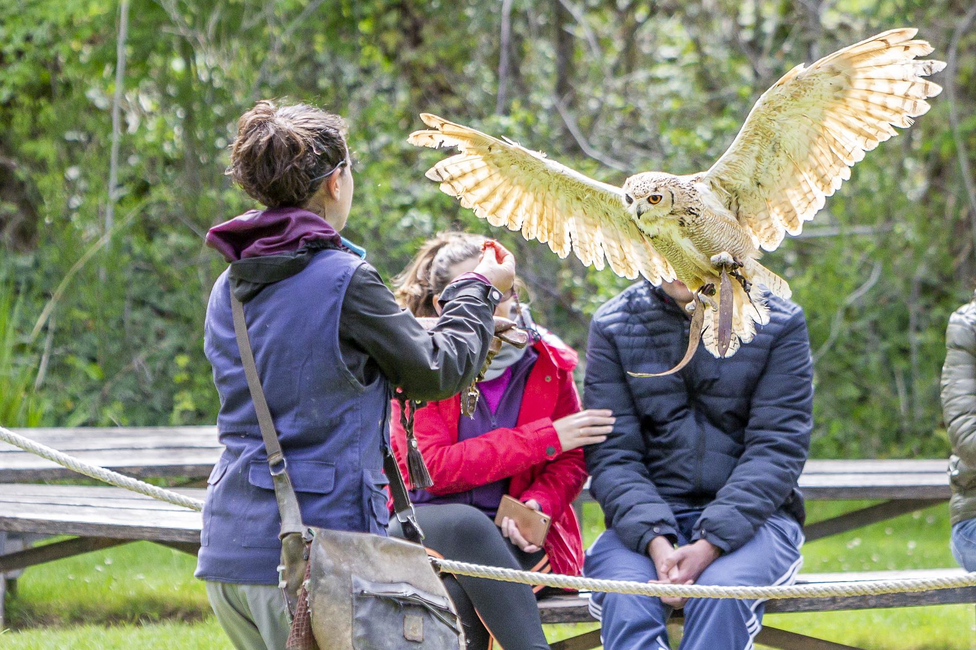 La exhibición de aves rapaces, otro plan para que los niños no quieran marcharse nunca del parque.