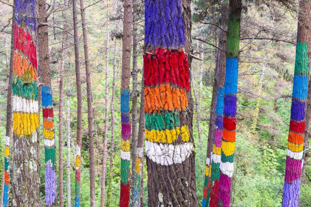 Bosque de Oma (Parque de Urdaibai)