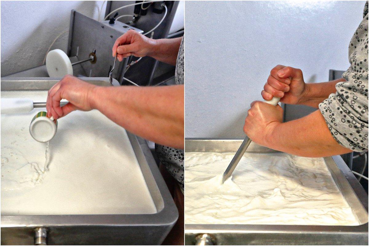 'Beni' cuaja la leche con el cardo y luego corta el cuajo para elaborar los quesos.
