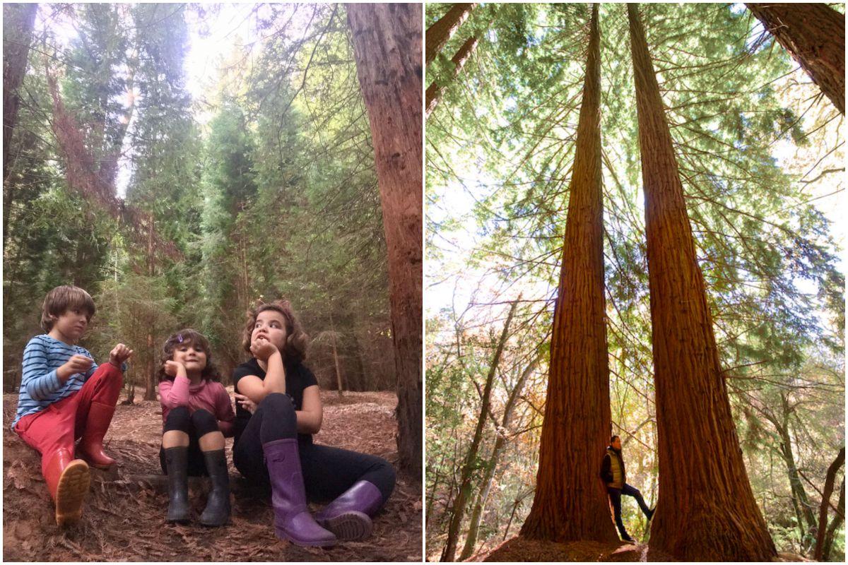 Niños en el Monumento Natural de las Secuoyas, y junto a unos ejemplares.