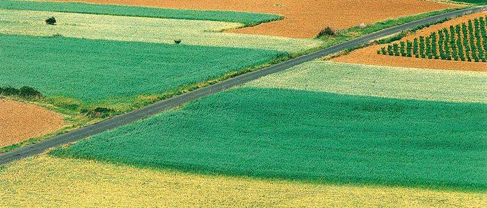 Espectáculo de colores en los campos de cultivo de Alfaro.
