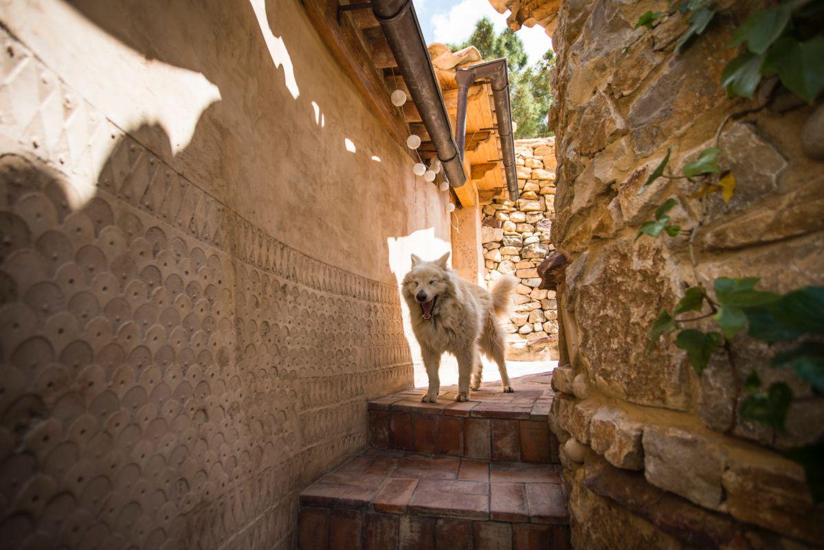 Sebastián, uno de los tres perros de la casa rural Mar de la Carrasca, en el parque natural de Peñagolosa, Castellón.