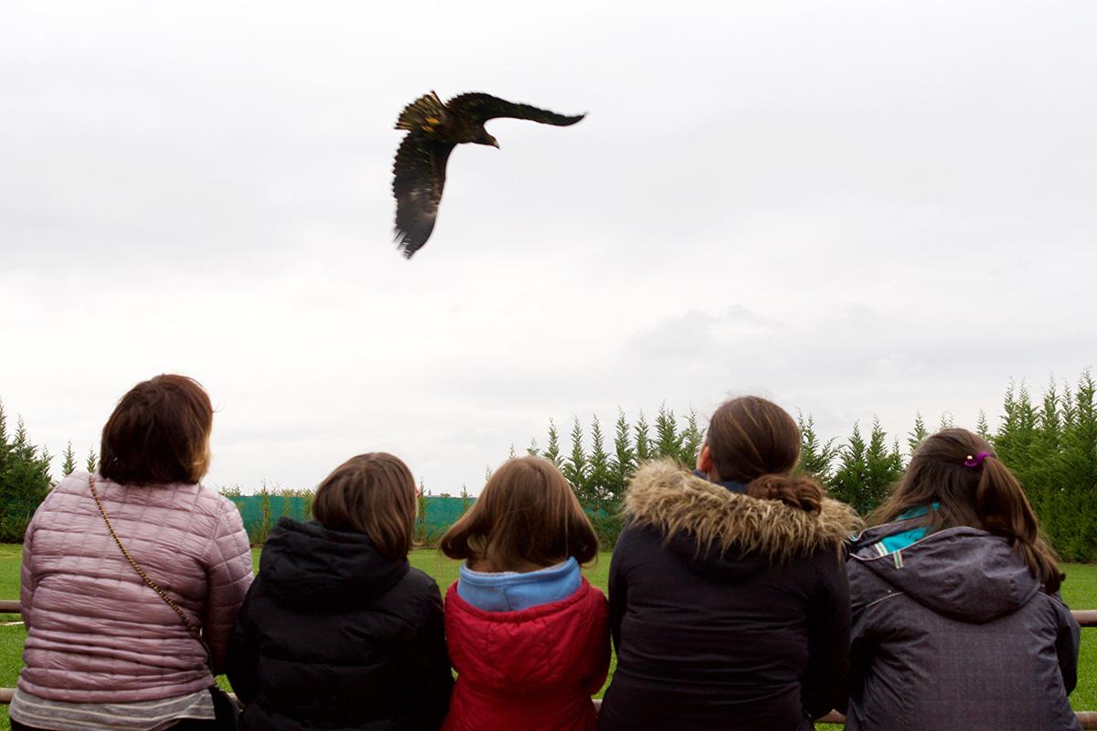 Durante la demostración las aves vuelan en un campo de 5.000 metros cuadrados.