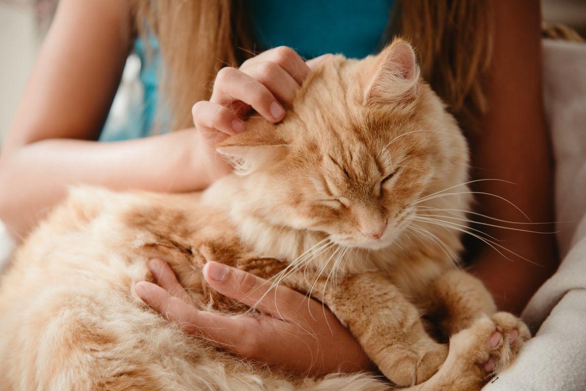 Los masajes suaves entre las orejas y en el cuello les ayuda a relajarse. Foto: shutterstock