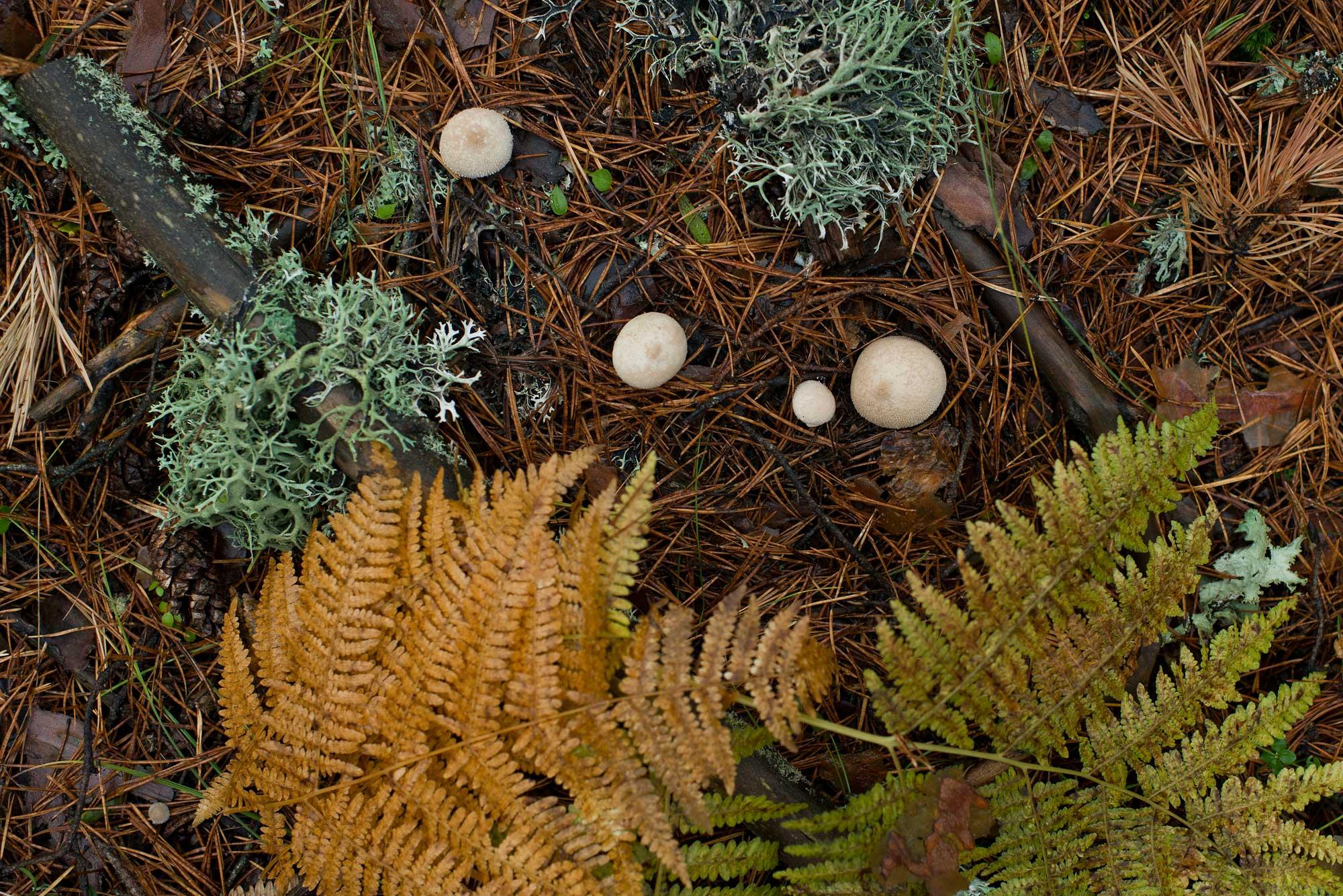 Las agujas de pino color castaño en el suelo con que Hemingway empieza y acaba la novela.