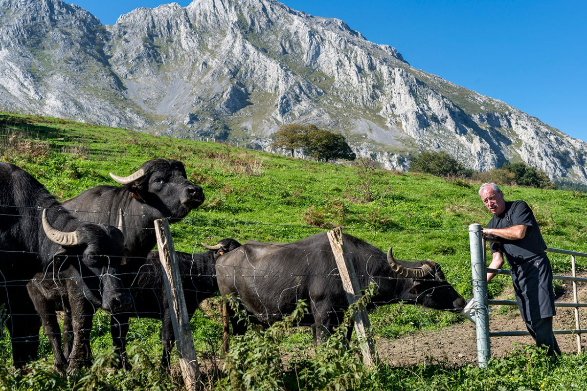 En la ladera, frente al caserío en el que vive, con sus búfalas.