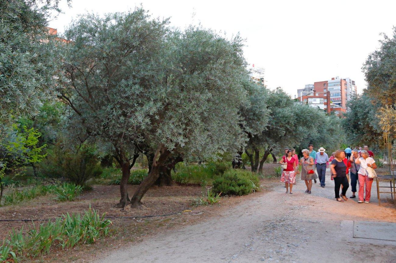 Noches del Olivar: olivar