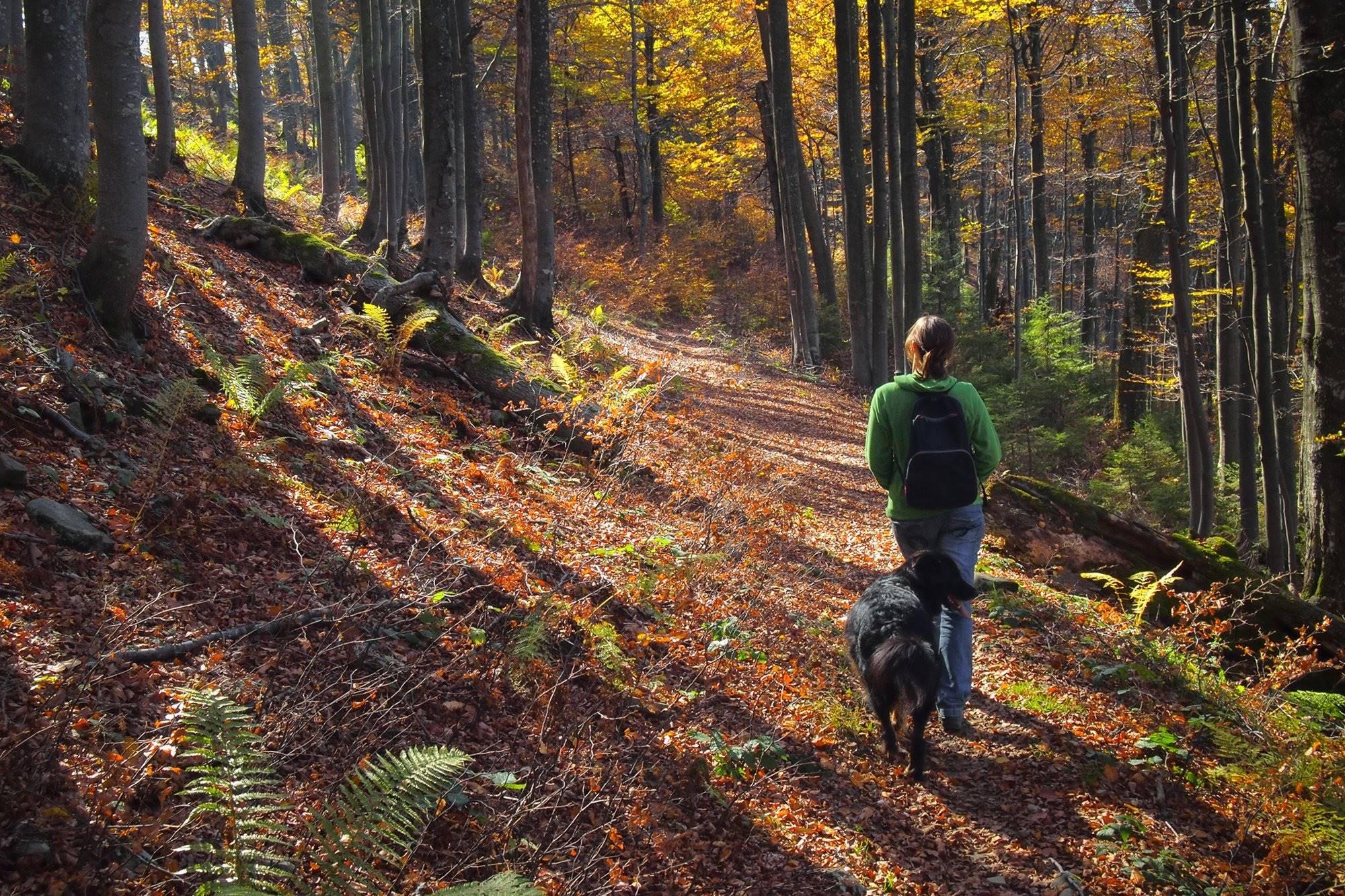 El senderismo es una buena opción para empezar las aventuras con animales. Foto: Shutterstock