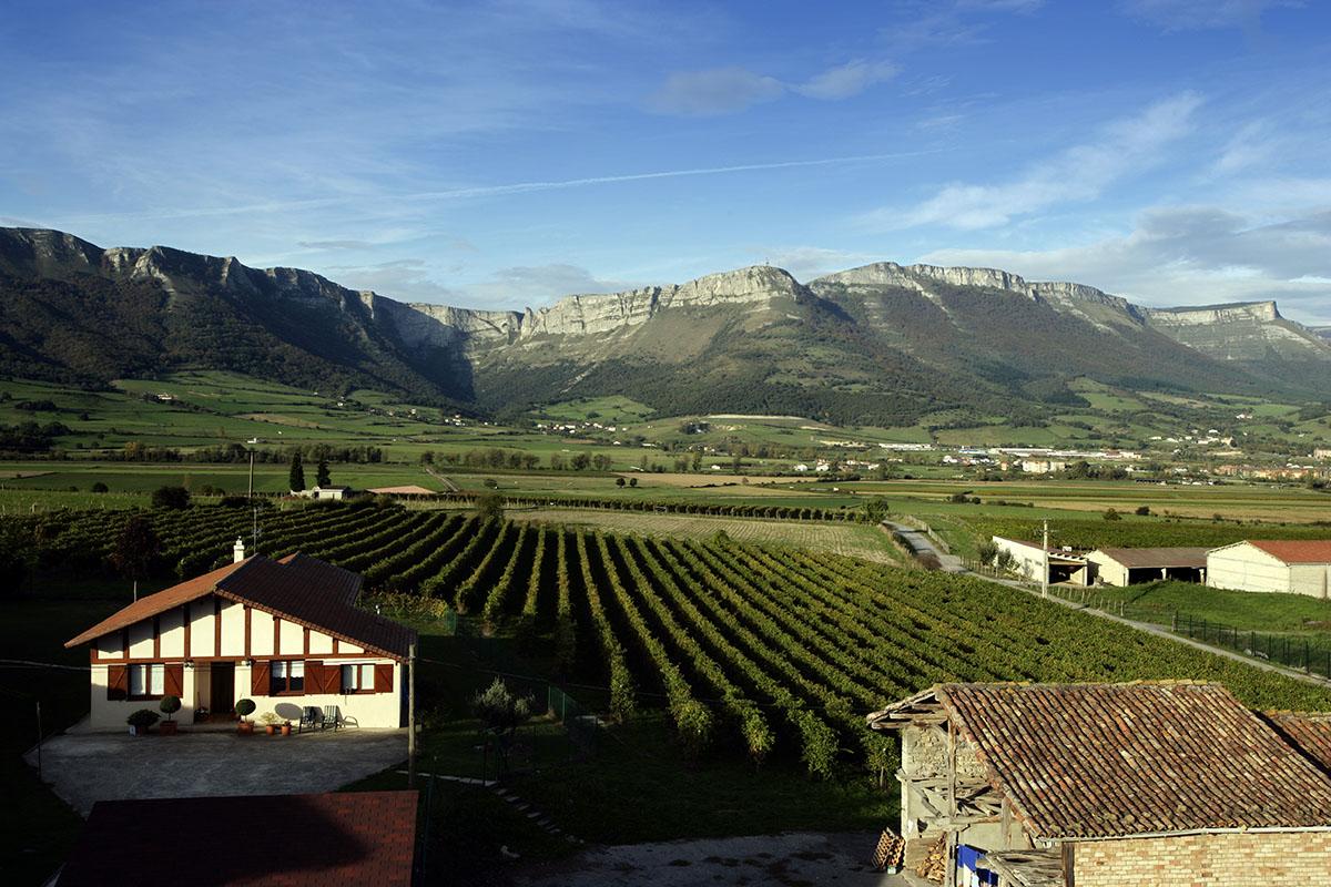 Paisaje de viñedos y montañas de Artomaña Txakolina.