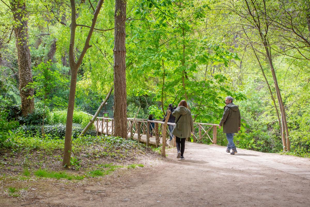 Todos los senderos están abrigados con la vegetación del bosque.