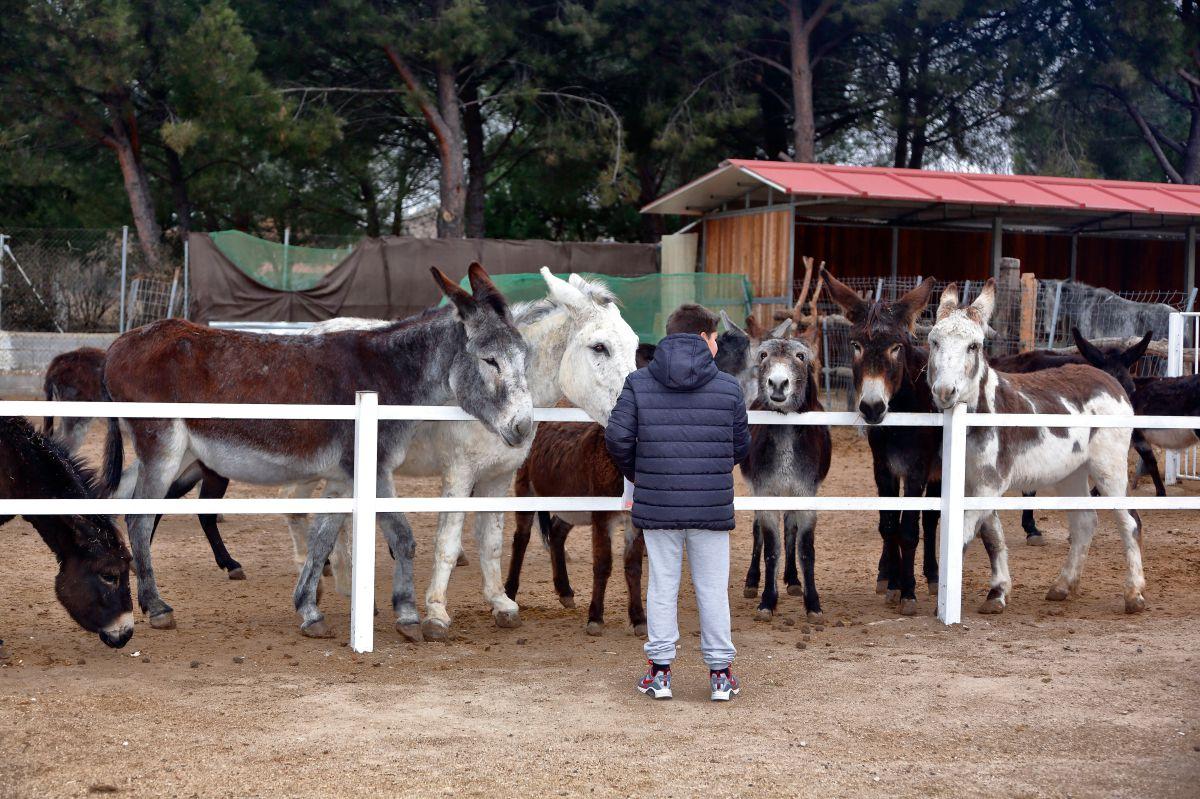 Aquí hay 44 burros deseosos de que vengas a saludarlos.