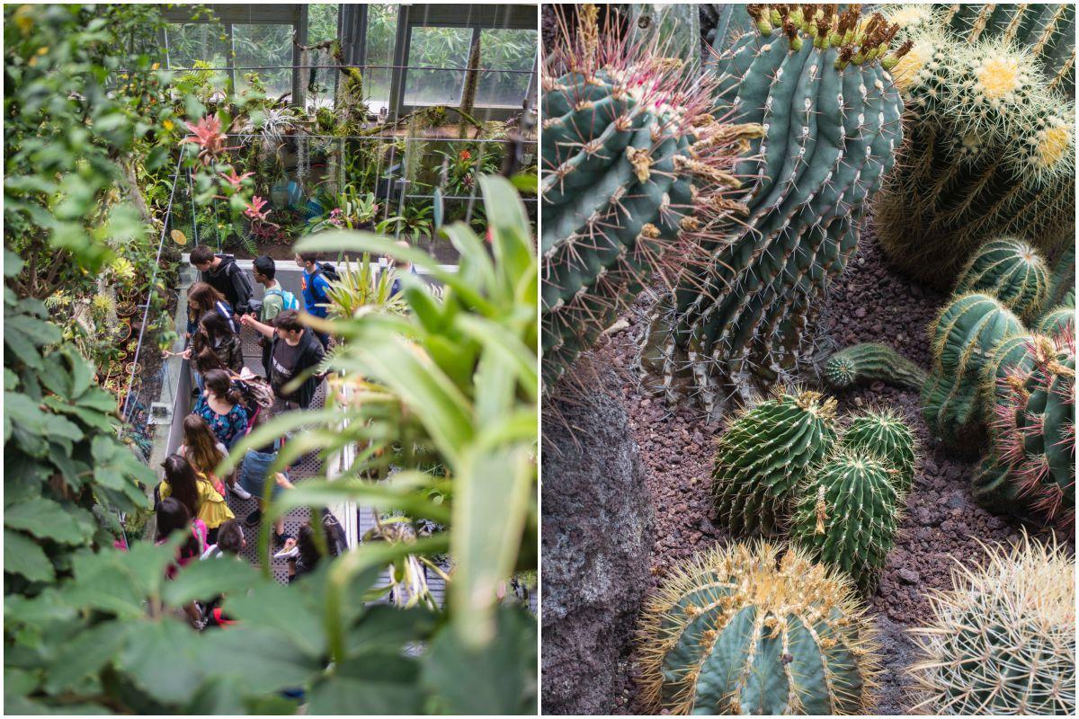 Un grupo de escolares observan las plantas carnívoras y cactus en el Real Jardín Botánico de Madrid.