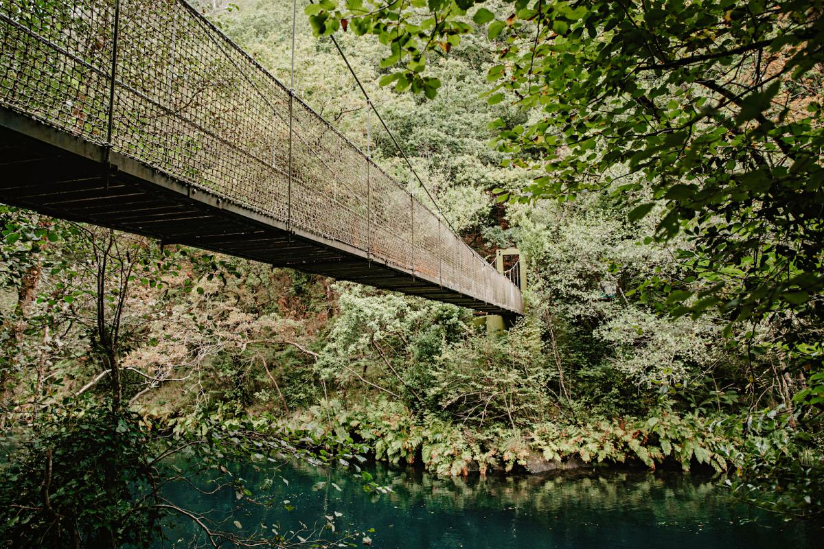 Los puentes colgantes convierten este bosque en una aventura.