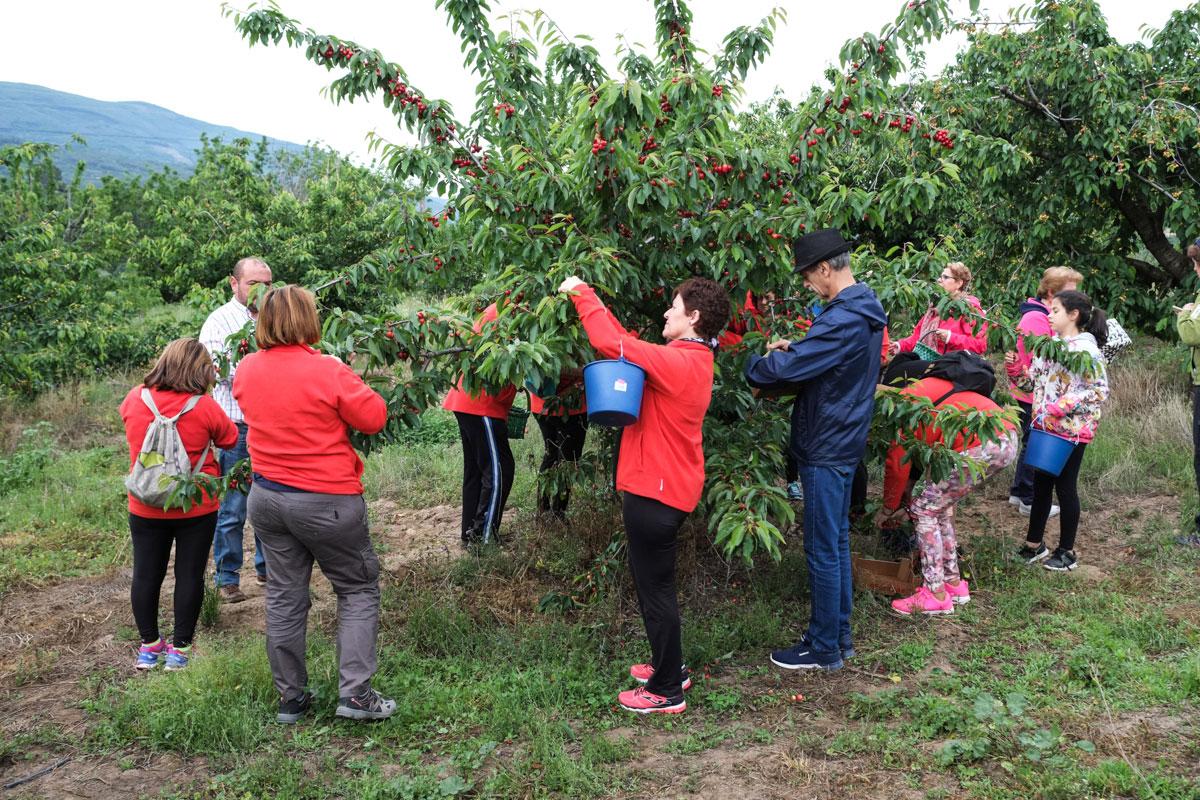 El grupo se divide en cuadrillas para trabajar en árboles diferentes.