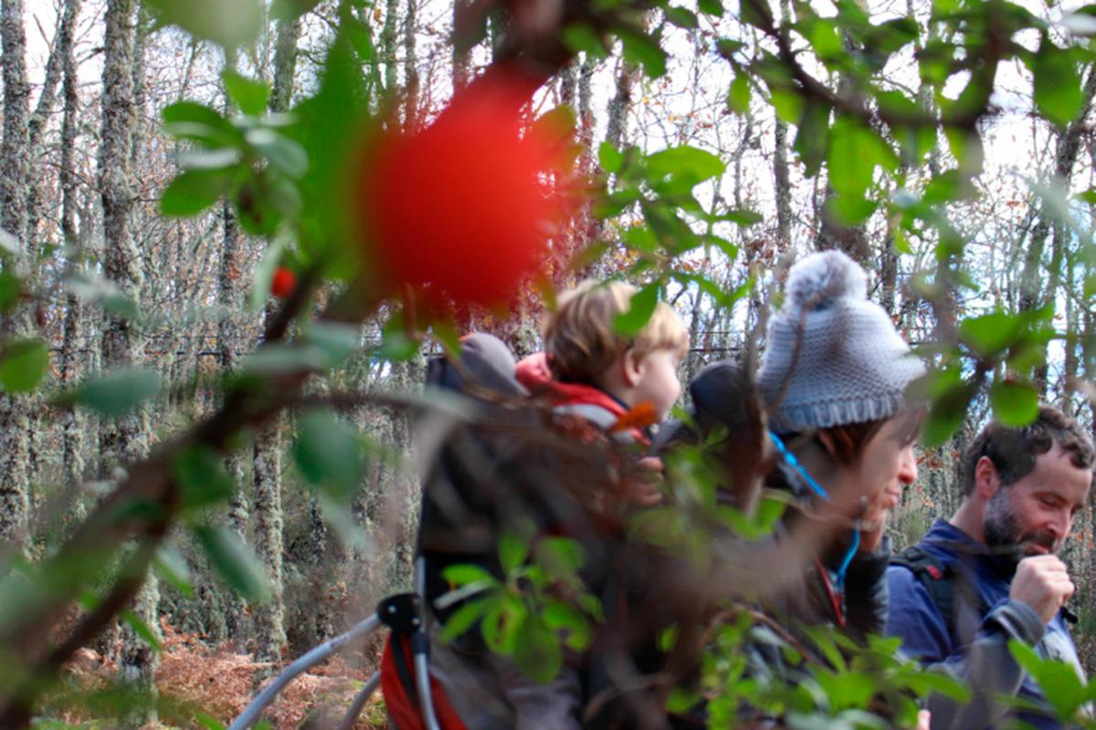 Madroños en los caminos de los bosques de Las Batuecas.