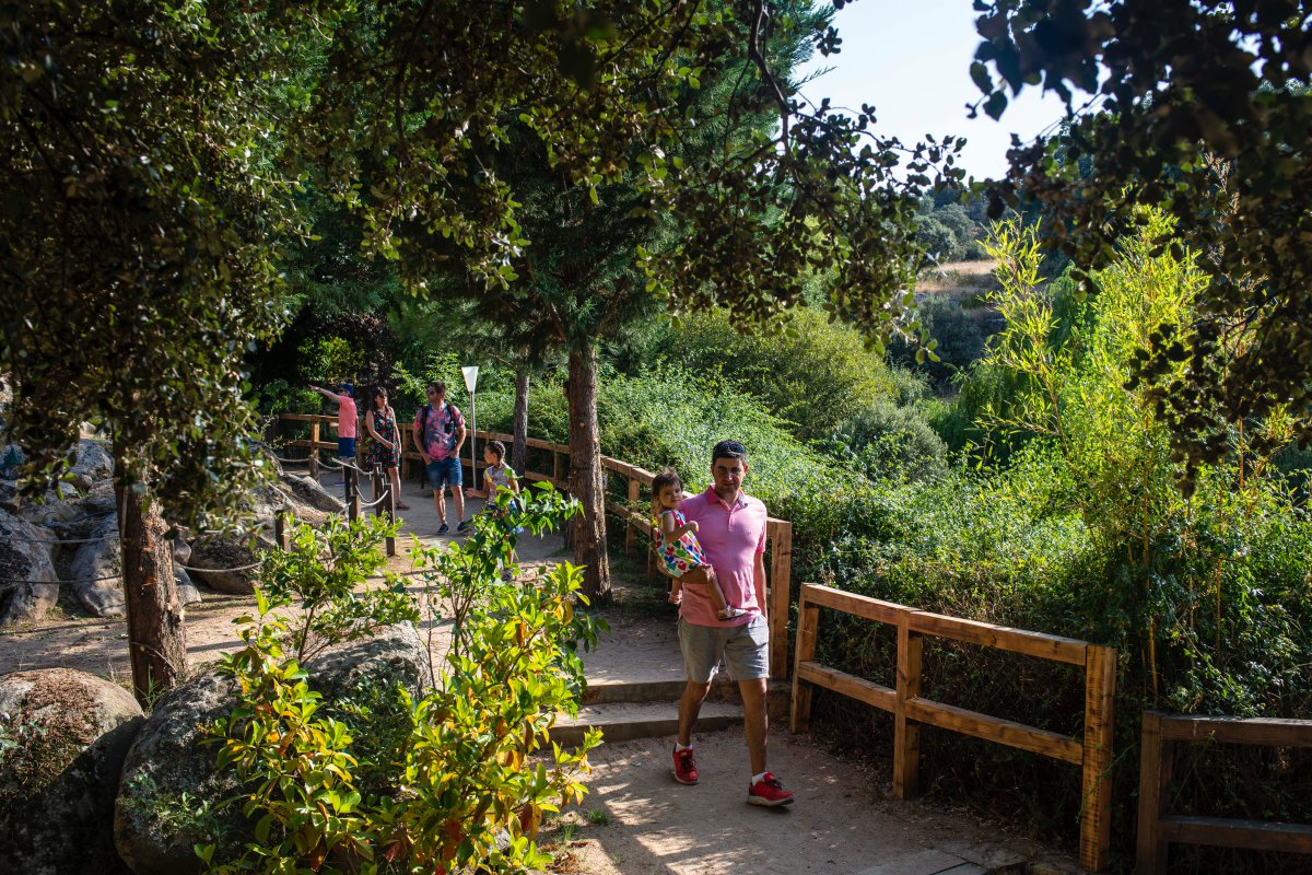 El bosque cuenta con más de 300 esculturas vegetales.