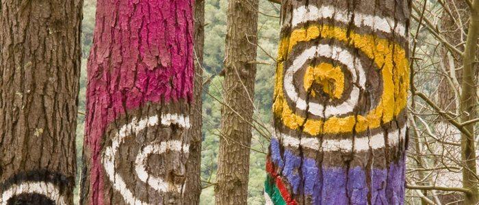 Bosque Oma pintado por Ibarrola.