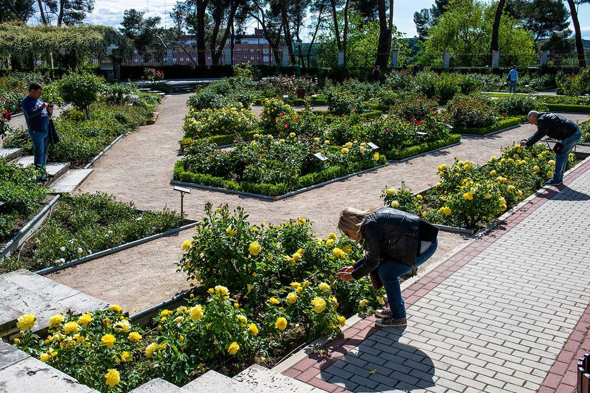 Una pareja de turistas fotografían de cerca unas rosas amarillas en La Rosaleda del Parque del Oeste (Madrid).