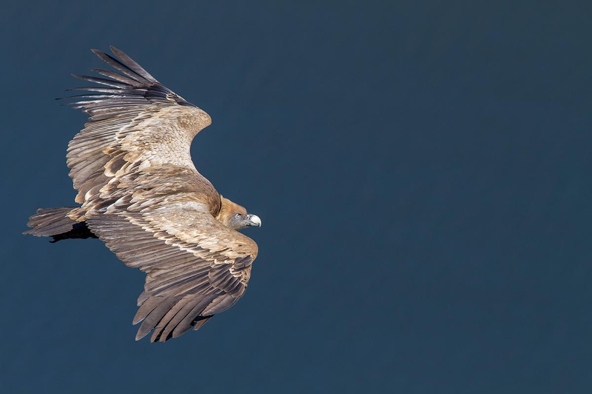 El avistamiento de aves es uno de los grandes atractivos del entorno. Foto: Shutterstock.
