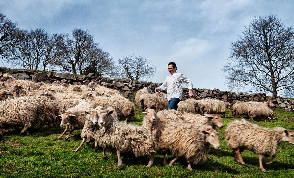 Aduriz corre entre ovejas