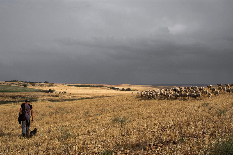 300 hectáreas de pastoreo para 2.500 ovejas.