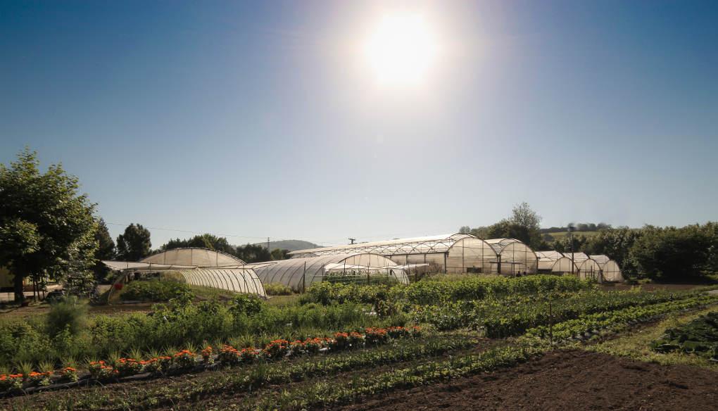 Son muchos los restaurantes que ya conocen su producción ecológica.