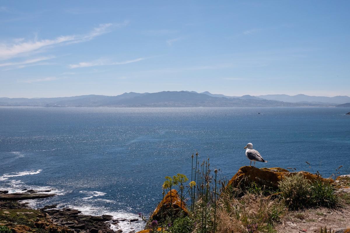 Las islas del Parque Nacional también son conocidas como las Islas de las Gaviotas.