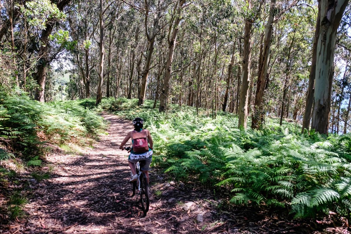 Un bosque en la ruta norte indica que ya estamos acercándonos a la Playa de Melide.