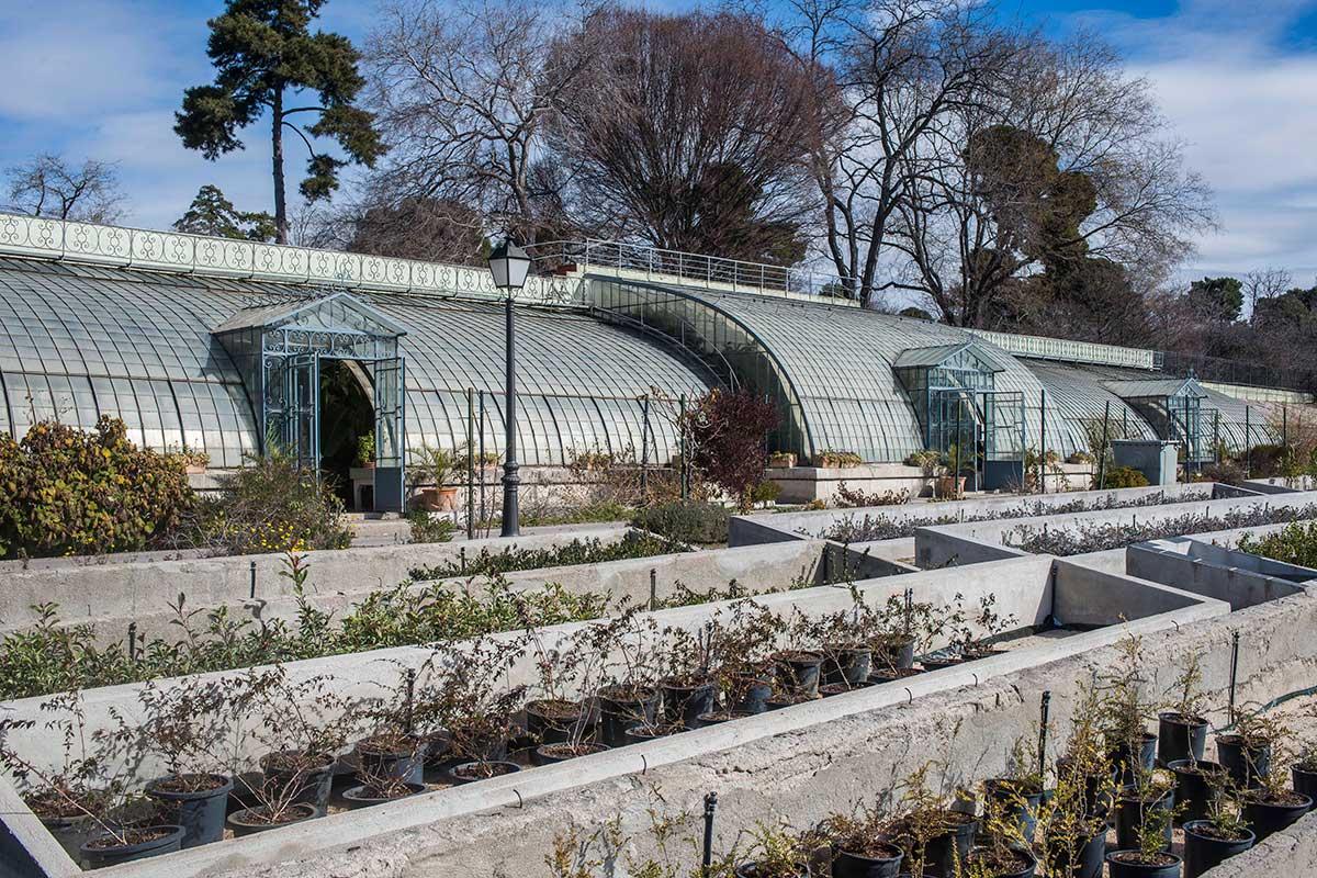 El invernadero del Palacio de Liria. El jardinero de los Alba –y del Retiro– lo retiró del palacio en los años 50.