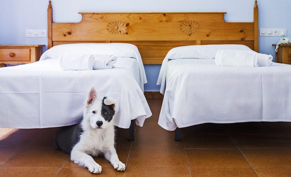 0d02f08968ab Hoteles que admiten perros grandes   Guía Repsol