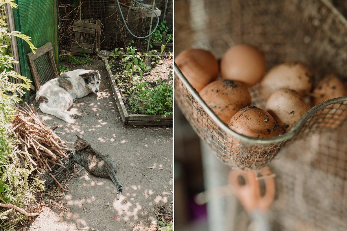 Luna descansa junto a Mouse cerca del corral de las gallinas que también pueblan la huerta de Adelina.