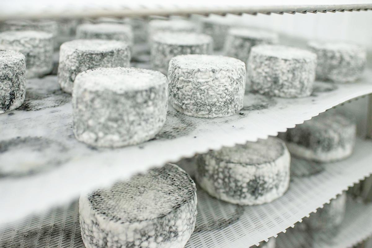 Los quesos Luna Negra, hechos con leche cruda, cuajo, sal y carbón vegetal.