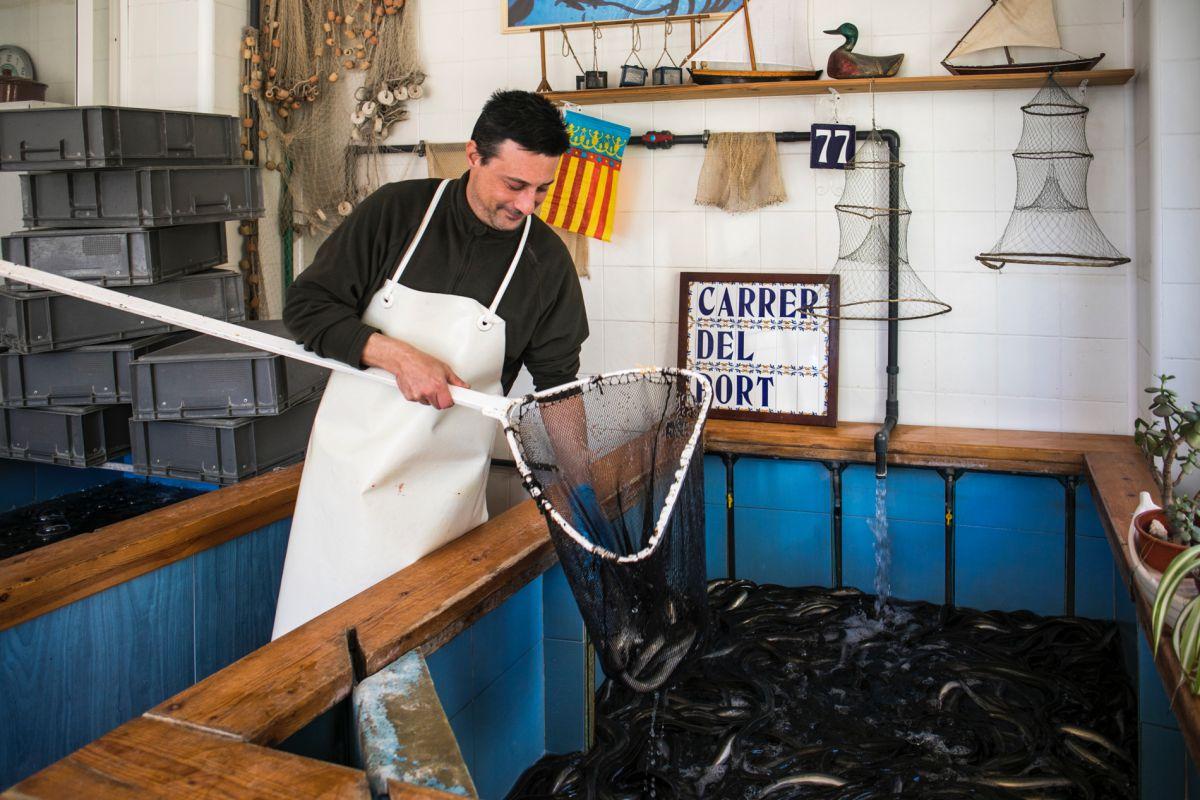 Sacando anguilas de la piscifactoría de Anguilas El Galet, en Catarroja, Valencia.