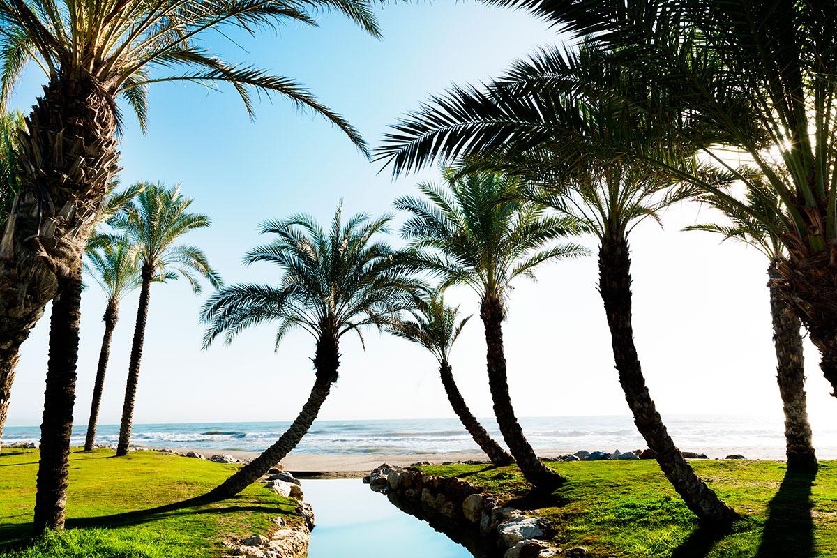 La playa de Los Álamos en Torremolinos luciendo palmeras. Foto: Shutterstock